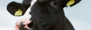 uitspraak gerechtshof den haag melkveehouders
